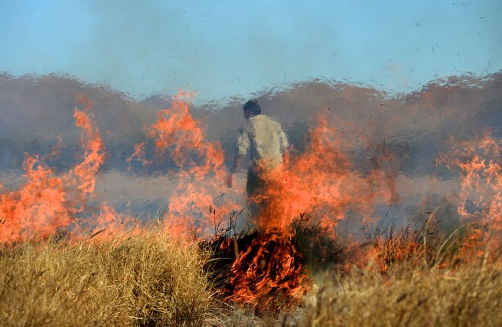 Aboriginal rangers conduct a controlled burn to protect the black-footed rock-wallaby at Ernabella in the Anangu Pitjantjatjara Yankunytjatjara (APY) Lands in South Australia on August 12, 2014.