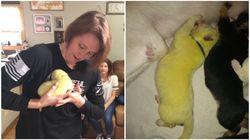 シェパードが緑色の子犬を出産。ユニークな毛色から「ハルク」と名付けられる