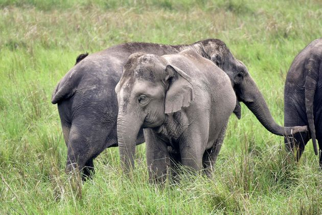 Jharkhand Puts Off Building Airport To Save Vital Elephant Corridor