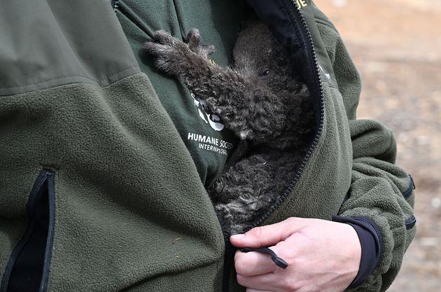 救出したばかりの赤ちゃんコアラを抱くケリー・ドナサン氏