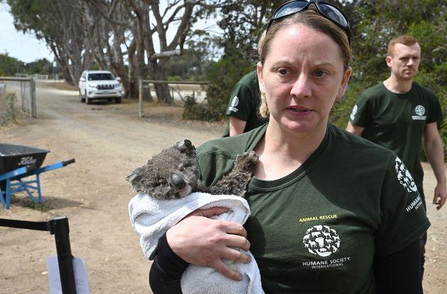 救出したコアラを抱きかかえる