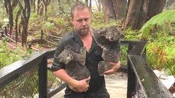 Australian Zoo Staff Save Koalas, Beat Back Alligators In Dramatic Flash Floods