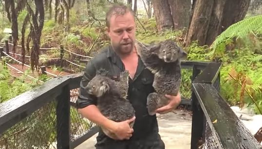 Australian Zoo Staff Save Koalas, Beat Back Alligators In Dramatic Flash Floods