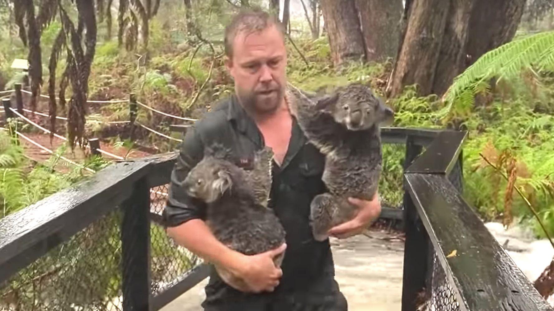Westlake Legal Group 5e22fddc2200003200473086 Australian Zoo Staff Save Koalas, Beat Back Alligators In Dramatic Flash Floods Video
