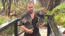 ア動物園スタッフの保存コアラが、裏ワニ劇的に洪水ビデオ