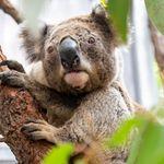 Αυστραλία: Η στιγμή που φύλακες ζωολογικού πάρκου σώζουν κοάλα και αλιγάτορες από τις