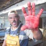 Une vidéo choc alerte sur la consommation de dauphins protégés en