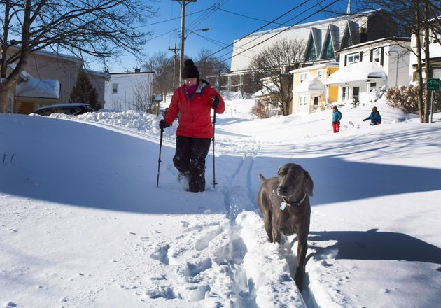 Tracey Boland snowshoes, with her dog, in the middle of a major street, in downtown St. John's on