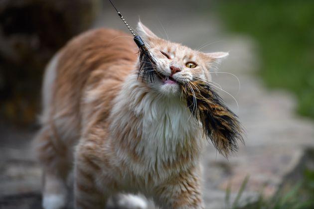 猫と遊ぶ時間って本当に幸せですよね