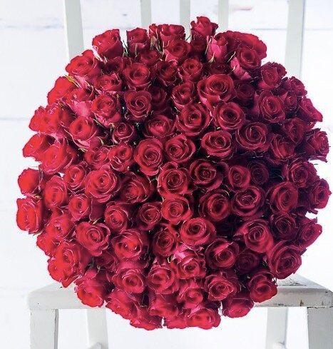 100 Red Roses, Appleyard