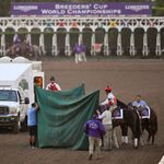 3 Horses Die In 3 Days At Notorious US