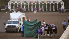 3 Pferde Sterben In 3 Tagen An Der Berüchtigten Santa Anita Rennstrecke