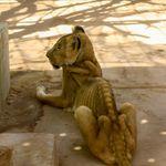 아프리카 수단의 한 동물원에서 사자들이 굶어죽고