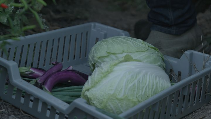 Wiser focuses on growing Asian and German heritage vegetables on her farm.