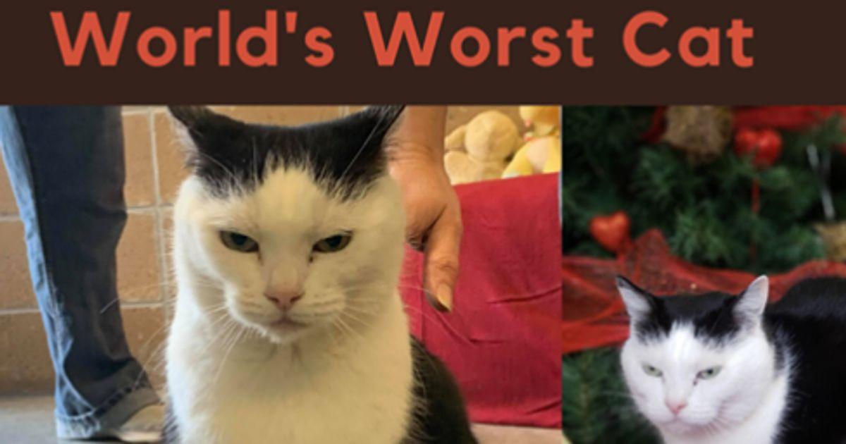Animal Shelter Seeks Forever Home For 'World's Worst Cat'