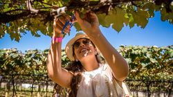 Por que esta é a melhor época do ano para visitar vinícolas pelo