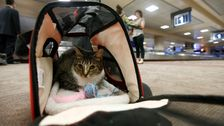 Tiere Zur Emotionalen Unterstützung Könnte Bald Verboten Werden, Flugzeuge
