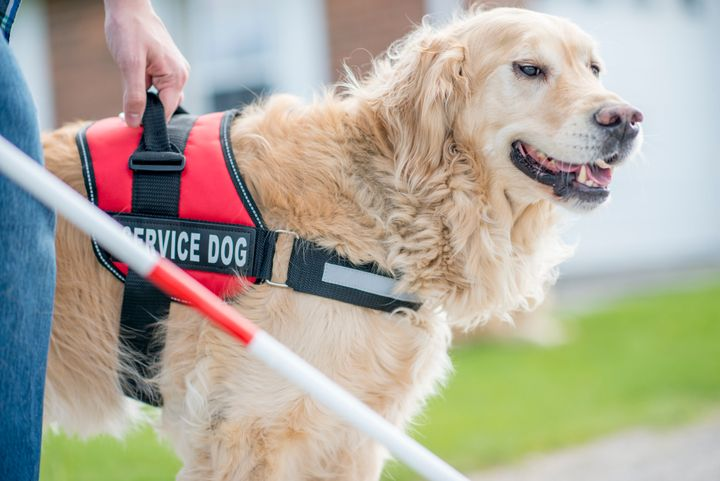 Service animals would be restricted to dogs that are specially trained to do work or perform tasks for the benefit of a person with a disability.