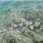 Επιστήμονες ανακάλυψαν 4 νέα είδη καρχαριών που