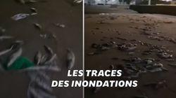 Une plage espagnole recouverte de poissons morts après le passage de la tempête