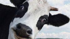 Το Twitter Έχει Νέα διαμάχη Με τον Ντέβιν Nunes Αγωγή Πάνω Παρωδία Αγελάδα Λογαριασμό