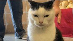 Κέντρο διάσωσης ζώων βάζει αγγελία υιοθεσίας για την «χειρότερη γάτα στον