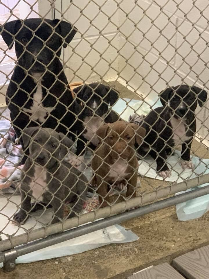 Mother Dog Found Dragging Her Puppies In A Crate On The Side Of The Road