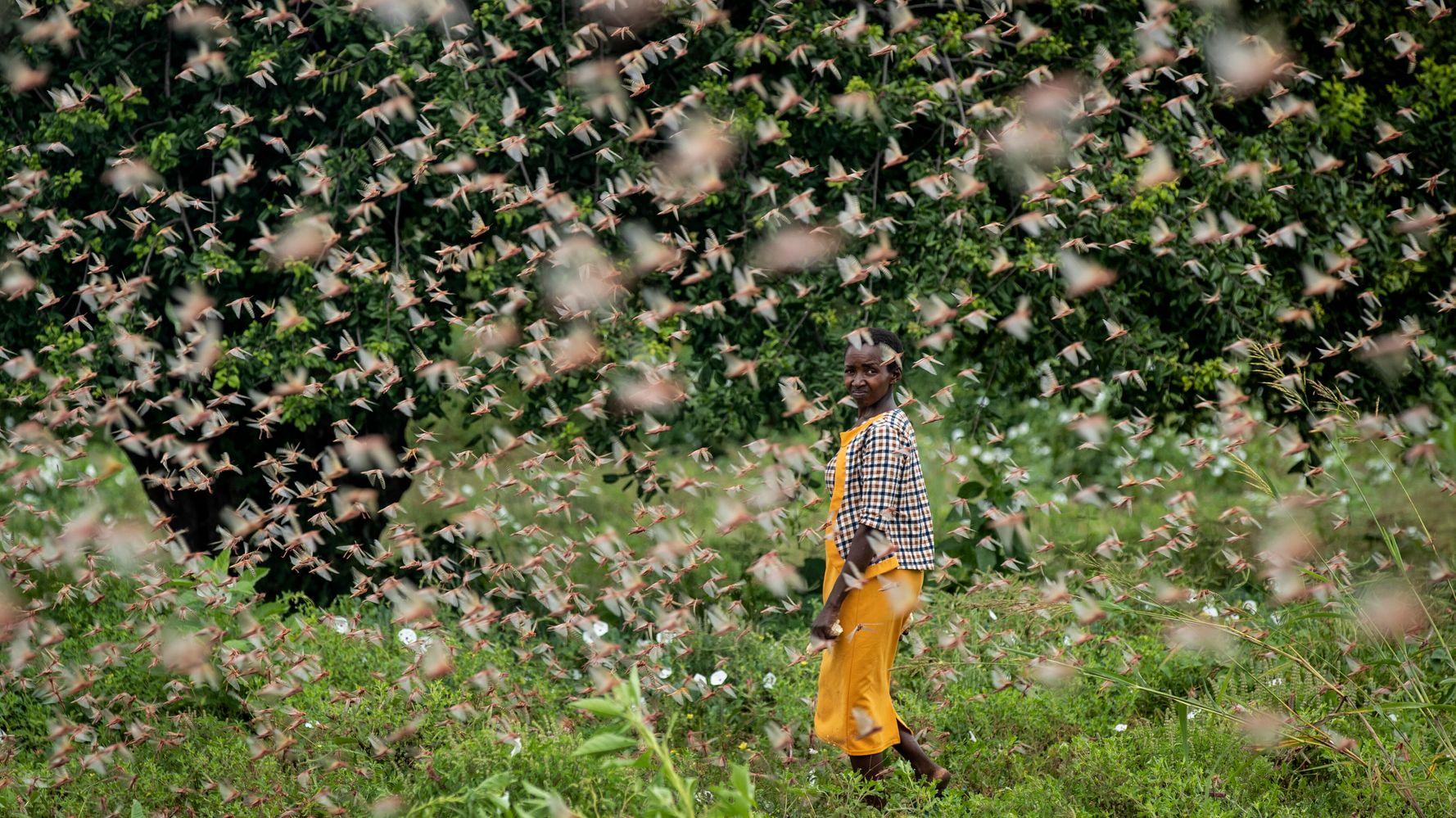 'This Is Huge': Locust Swarms In Africa Are Worst In Decades