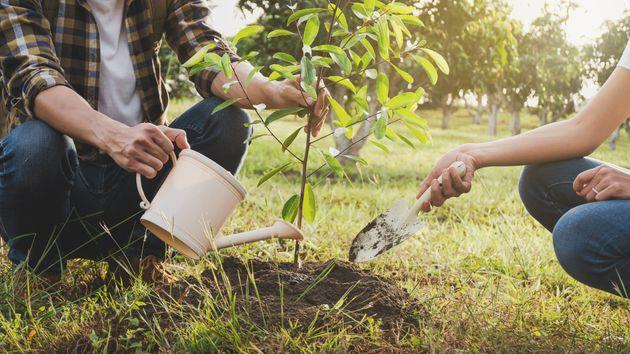 Plantar un billón de árboles no va a frenar el cambio