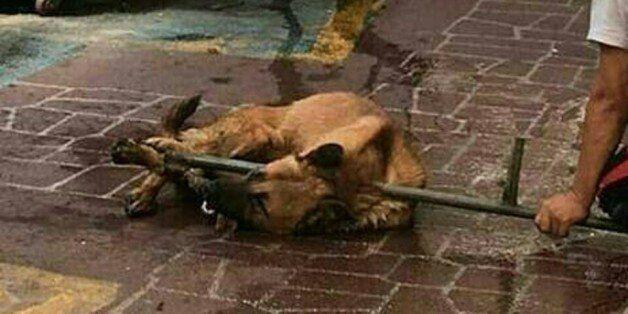 '다리묶여 끌려가는 개' 동물학대 논란에 경찰