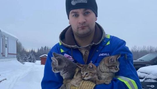 'Hero' Pours His Coffee To Rescue Kittens Left For Dead In Frigid