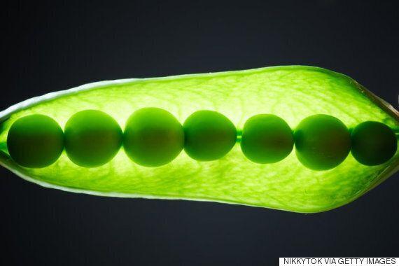 과학계, 식물은 소리로 물을 찾고