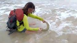 새끼 상어와 셀카를 찍은 관광객이 엄청난 벌금을 물게