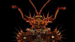 현미경 사진으로 본 곤충은 정말로