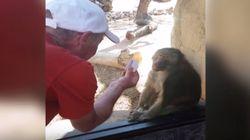 마술을 처음 본 개코원숭이의