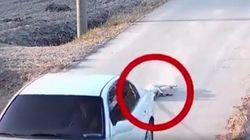 개를 차에 묶어 1.3km 내달렸다(사진,