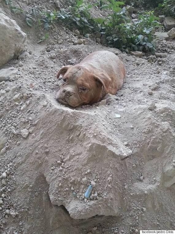지난 8월, 프랑스에서 생매장을 당했던 개는 지금 잘살고