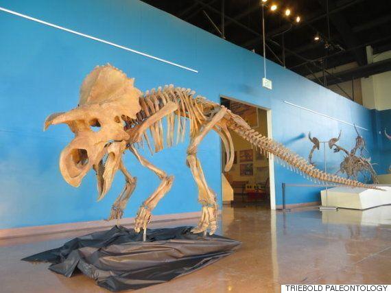 세상에서 가장 귀여운 공룡 '아바'를