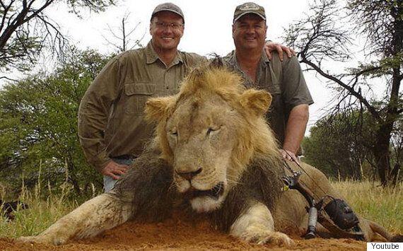 짐바브웨 사자 세실이 미국인 치과의사에 의해 잔인하게