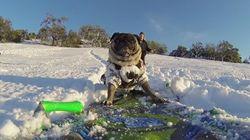 고프로로 찍은 강아지의 스노보드