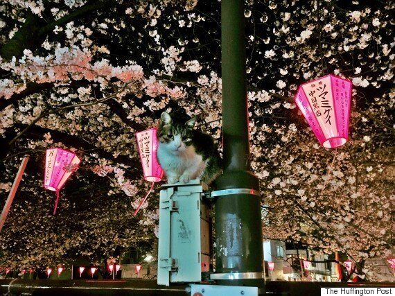 일본, 벚꽃의 계절이
