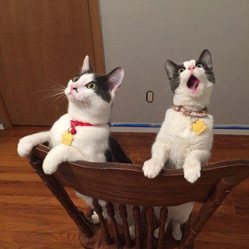 고양이들에게 세상은 놀라움으로