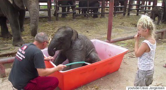 아기 코끼리의 목욕 시간은