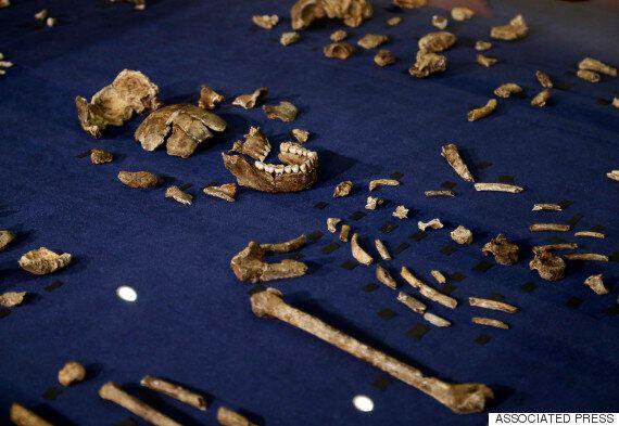 최고 300만년 전 살았던 새 인류 '호모 나레디' 화석