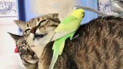 새들은 고양이가