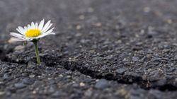 La esperanza: clave de nuestro bienestar y de nuestros