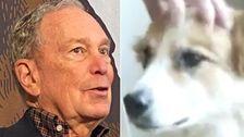 Ο Μάικ Μπλούμπεργκ Είχε Μια Παράξενη Συνάντηση Με Έναν Σκύλο Στην Προεκλογική Εκστρατεία