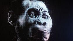 «Θησαυρός» απολιθωμάτων του Homo naledi στη Νότια