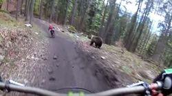 Αρκούδα πήρε στο κυνήγι ποδηλάτες και έτρεχε