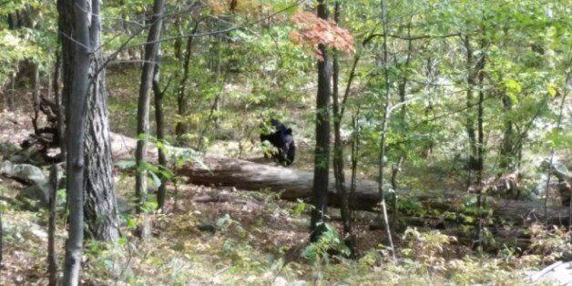 'Εβγαζε φωτογραφίες την αρκούδα που τον σκότωσε